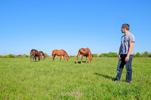 The man is standing in a clearing where the horses graze. Pasture of horses.