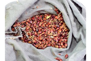 Sorghum seeds in a bag. Red seeds of a broom. Sorghum stern.