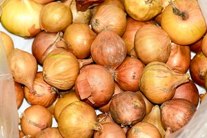 Onion bulbs. White onion with yellow skin. Harvest the onion.