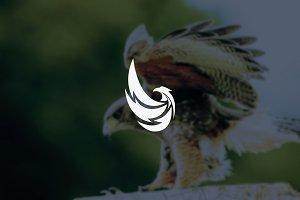 colorful hawk - eagle