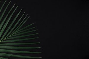 Palm Leaf With Copy Space