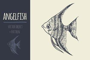 sketch angelfish