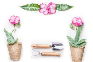 Garden tools and flowers in pots