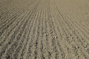 Plowed field, rows from soybean sowing. Soil on the field