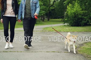 Slow motion of young man walking in the park with his girlfriend and dog, low shot of people's legs and beautiful pet running along the path. Owners and animals concept.