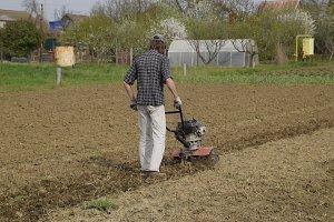 A man plows a tiller in the garden. Spring cultivation of the garden