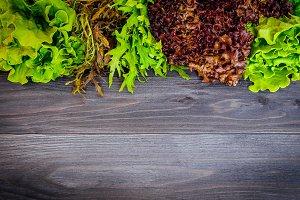 Set of fresh organic salad leafs