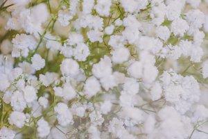 Baby's-breath Wedding Flowers