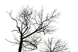 Black Trees Silhouette Isolated Graphic