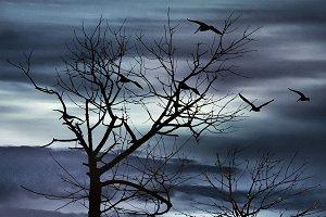 Night Nature Scene Background