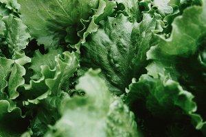 Green leaf lettuce, close-up.