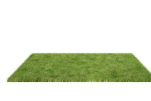 Lush grass field isolated on white b