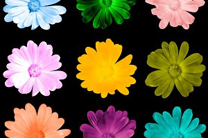 Colorful flowers isolated on black