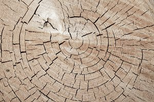 Tree trunk background texture