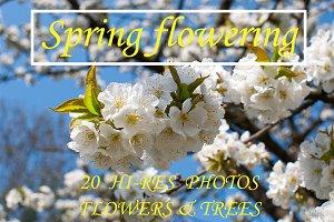 SPRING FLOWERING 20 PHOTOS
