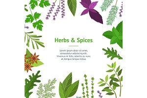 Cartoon Herbs Spices Set.