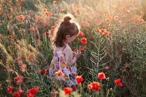little girl in the poppy field