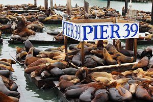 Pier 39 with sea lions