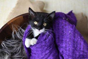 Cute black and white kitten