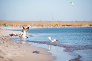 Group of seagulls ower sea