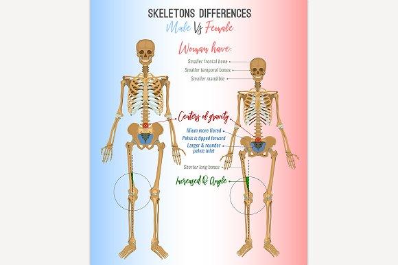 Skeleton differences image ~ Illustrations ~ Creative Market