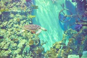 Beautiful Sea World. Sea turtle.