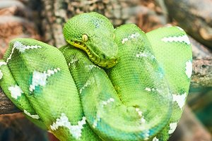 Live nature. Green snake