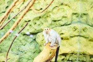 Live nature. A monkey