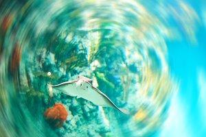 Beautiful Sea World. Sea fish at dep