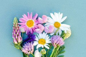 Variety of wild flowers, daisies