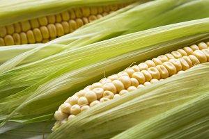 Fresh corn husks, close-up. Corn