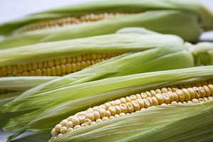 Fresh corn on the cob with green