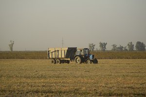Soy harvesting by combines in the