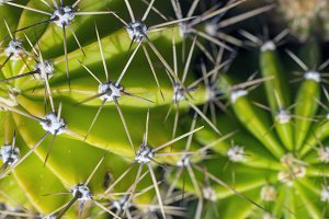 close-up of the thorns of a cactus