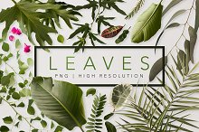 Real Leaves - Green Cutout Leaf  by  in Objects