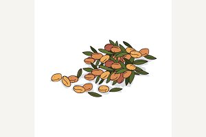 Isolated clipart Argan