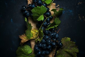 Blue wine grapes with vine and leave