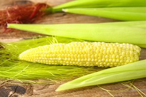 Close up of a young ear of corn with