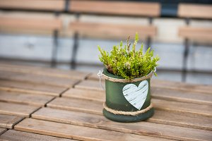 Green pot with flower and heart on t