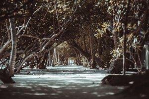 Dark parkway surrounded tropics