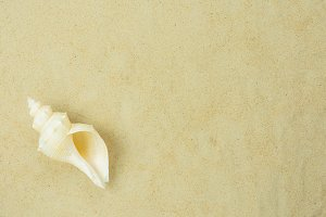 Top view shell on sand.