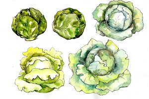 Green cabbage vegetables PNG set