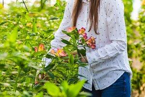 The wonderful alstroemeria flowers