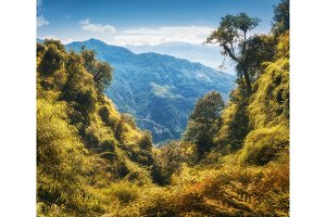 Tropical forest on the mountain