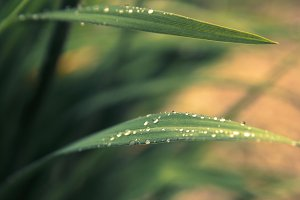 Fresh grass with raindrops.