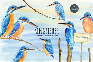Bird Kingfisher Illustration