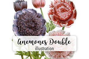 Floral: Anemones Double Flowers