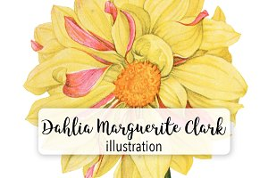 Florals: Dahlia Marguerite Clark
