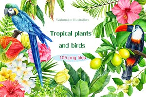 Tropical plants and birds
