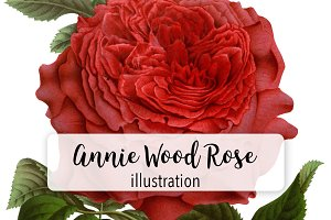 Florals: Annie Wood Rose